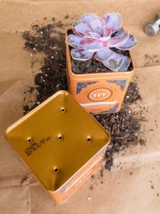 diy succulent planter-tea tins