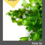 how to freeze parsley pin